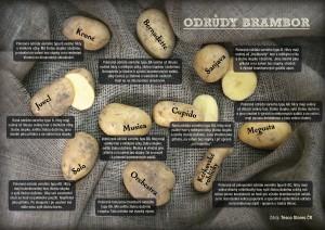 DOMOV, ZAHRADA-brambory