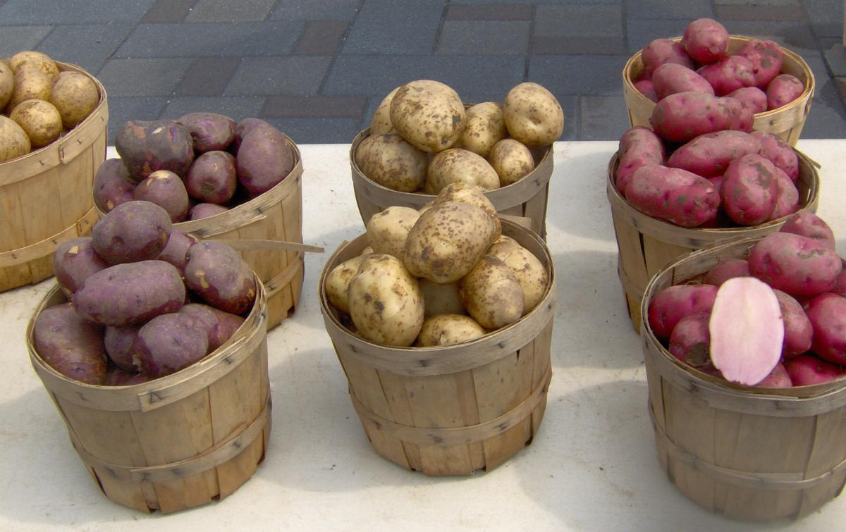 typy brambor2