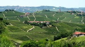 Z kraje Piemont pochází velmi kvalitní vína oceňovaná na celém světě.