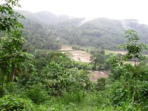 Uprostřed džungle na vás tu a tam vykouknou rýžová pole.