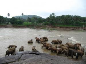 Koupající se stádo téměř 80 slonů je opravdovým (i když organizovaným) zážitkem.